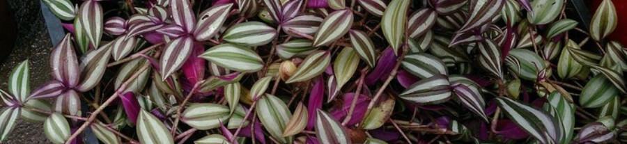 Top 10 plantes de terrarium pour un gecko à crête
