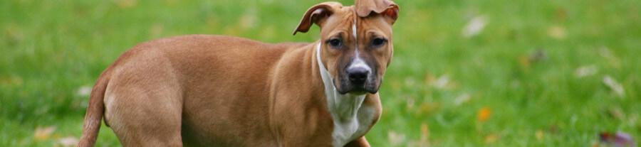 10 signes que votre chien est heureux