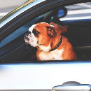 Transporter son chien en voiture : guide pratique