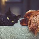 Accueillir un chaton quand on a un chien
