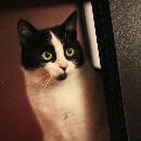 Votre chat chez le vétérinaire : 10 questions à poser lors de la consultation