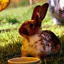 DIY : idées de jeux pour lapin à fabriquer vous-même