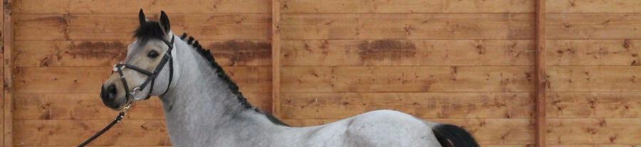 24 races de chevaux de sang reconnues et gérées en France