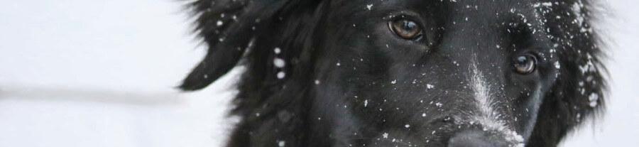 Emmener son chien à la neige : guide pratique