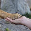 Cours d'éducation canine : prix, méthodes, exemples d'exercices