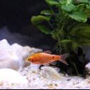 Comment savoir si mon poisson est malade ?