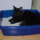 Quand et comment changer la litière de son chat ?