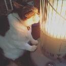 Ce chat aime les radiateurs