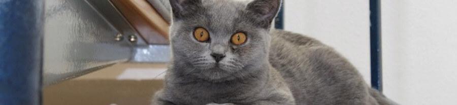 Bien choisir un laser pour chat