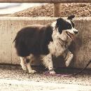 Certificat de capacité animalier : types, formation, prix