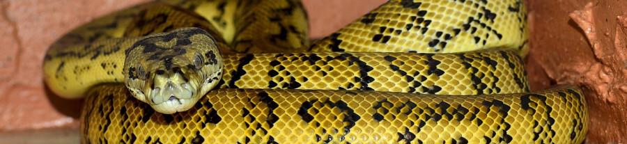 Les maladies les plus courantes chez les serpents