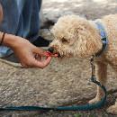 Comparatif des friandises naturelles et bio pour chien
