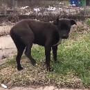 Sauvetage d'une chienne errante blessée par des enfants