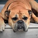 6 signes que votre chien n'a pas assez d'activité physique