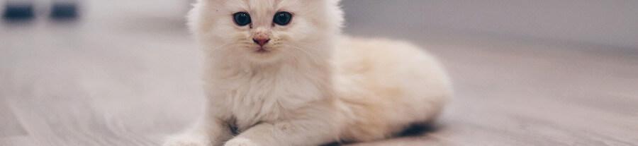 Comment déparasiter un chaton ?