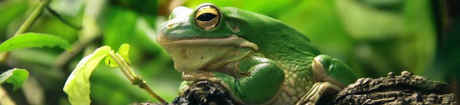 Conseils pour aménager un terrarium pour grenouilles