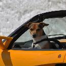 Chien ou chat malades en voiture : quels remèdes contre le mal des transports ?