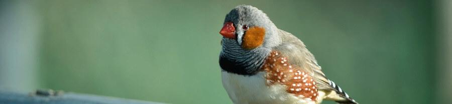 L'os de seiche pour vos oiseaux : vertus, utilisation, prix