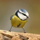 J'ai trouvé un oiseau blessé : guide pratique