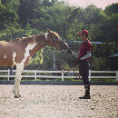La peur du cheval