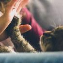 10 métiers d'avenir pour travailler avec les animaux
