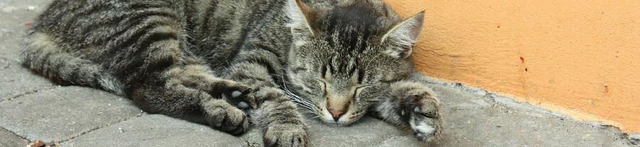 Mon chat dort plus que d'habitude