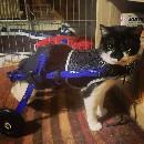 Bonny BatCat la Pirate, le chat et le handicap: entretien avec Mélodie Fournier