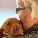 Top 10 des races de chien les plus calmes et faciles à vivre