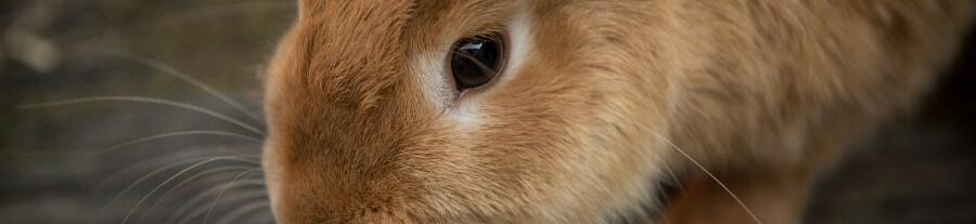 Mon lapin mange les croquettes pour chat ou chien
