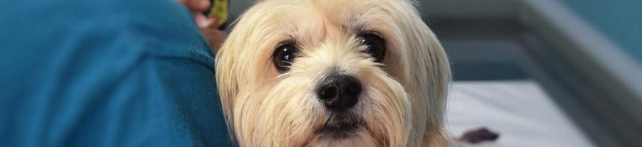 Paracetamol, aspirine, ibuprofene : médicaments très toxiques pour vos chats et chiens
