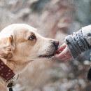 Pâte de curcuma : un puissant anti-inflammatoire pour chien et chat