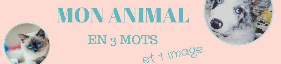 Mon animal en 3 mots : Partie II
