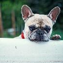 Partir avec son chien ou chat en vacances : à quoi faut-il penser ?