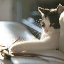 7 jouets pour un chat d'appartement qui s'ennuie