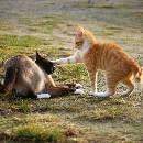 Mon chat est agressif et attaque mon autre chat