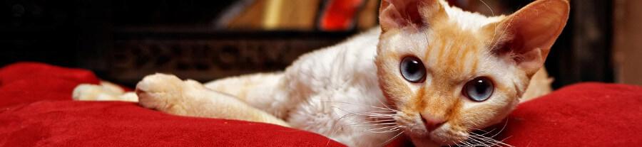 Allergie : quel animal de compagnie choisir ?