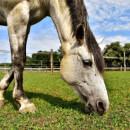 Aliments toxiques pour les chevaux