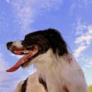 La mauvaise haleine chez le chien : causes et traitements