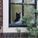 Mon chat passe son temps à regarder par la fenêtre