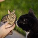 Mon chat peut-il cohabiter avec des petits animaux (oiseaux, rongeurs, reptiles...) ?