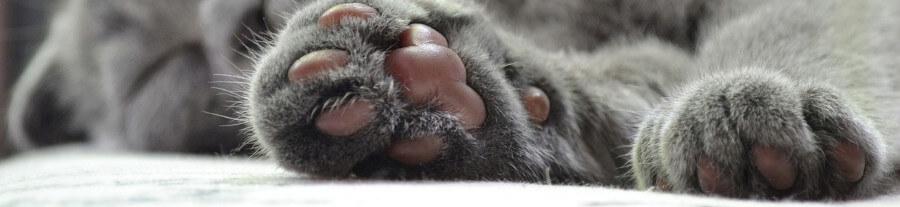 Comment soigner les coussinets de son chat ?