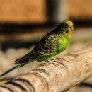 Le stress chez l'oiseau : sources, symptômes et produits anti-stress