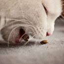 Lire les étiquettes de croquettes pour chien et chat pour mieux choisir