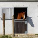 Combien coûte l'entretien d'un cheval par mois ?