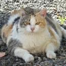 Comment faire maigrir un chat obèse ?