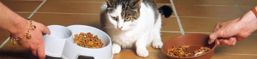Comparer les marques de croquettes pour chats