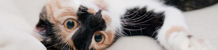 Comment savoir si mon chat est heureux ?
