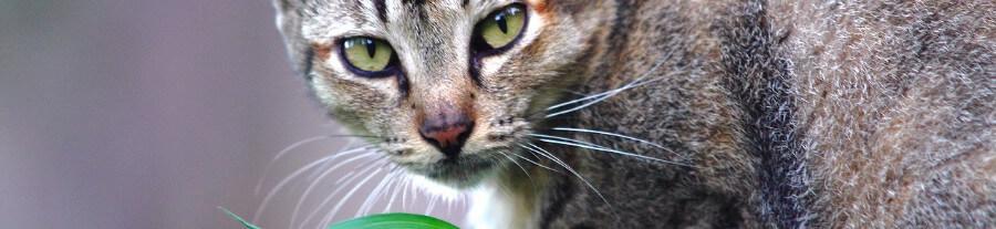 Top 5 des plantes qui apaisent les chats