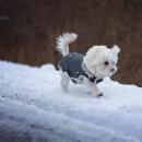 Manteau pour chien, comment choisir