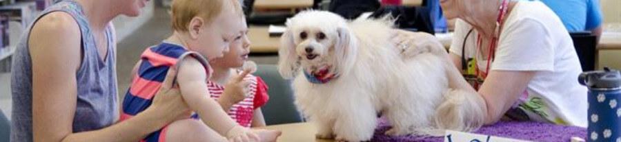 7 meilleures races de chiens de thérapie et chiens d'assistance